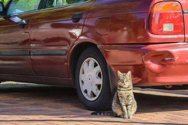 車の前で座っている猫