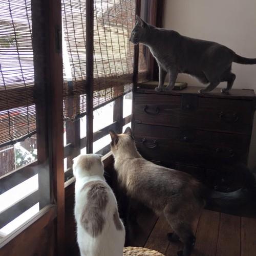 キャットアパートメントの店内にいる猫達