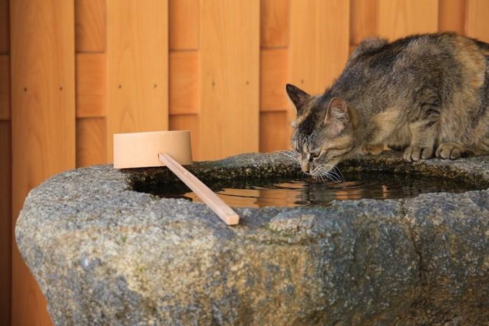 お寺の水を飲む猫