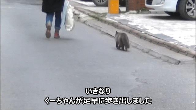 女性を追いかける猫