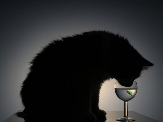 水を飲む猫の影