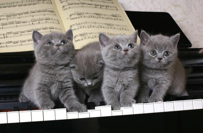 ピアノの上に乗る4匹の猫