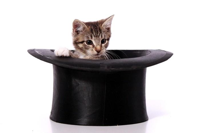 帽子の中の猫