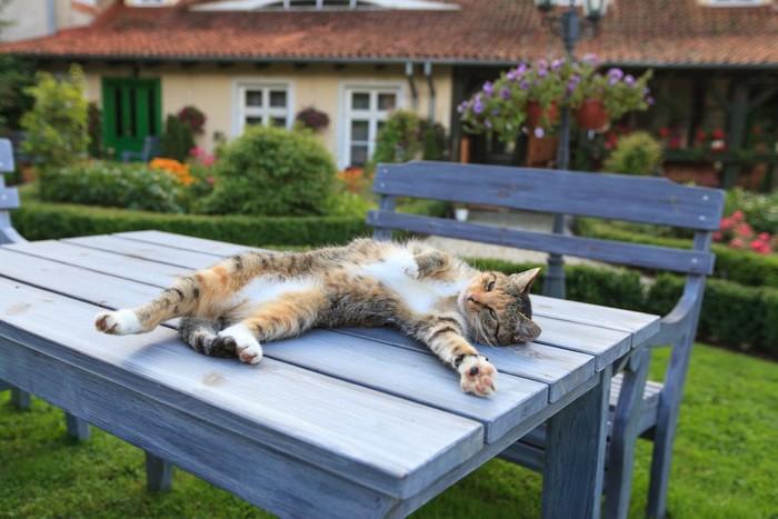 テーブルの上で仰向けでくつろぐ猫