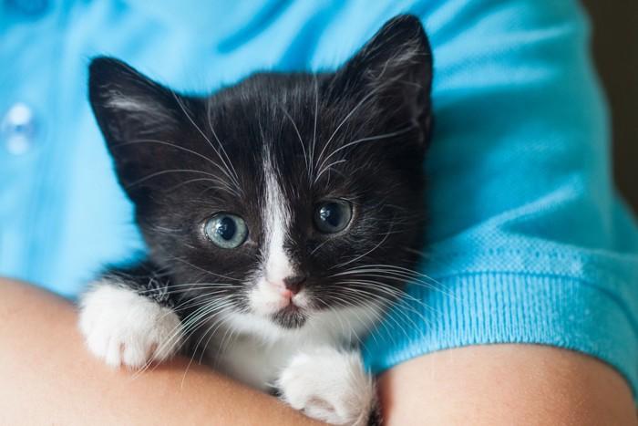 抱っこされている子猫