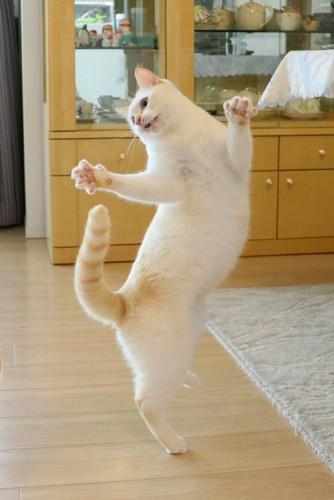 踊るチャコちゃん2
