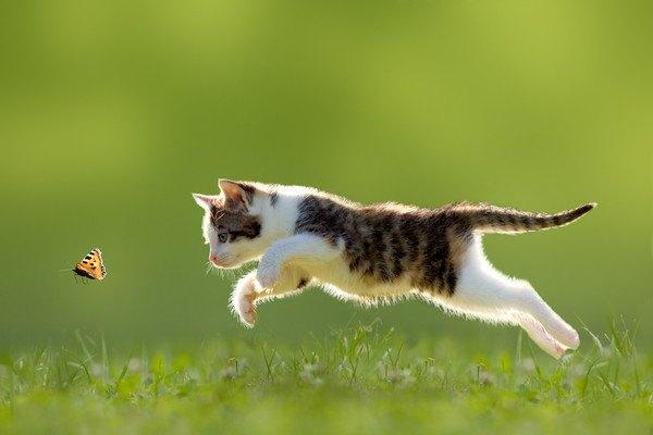 外で虫を追う猫