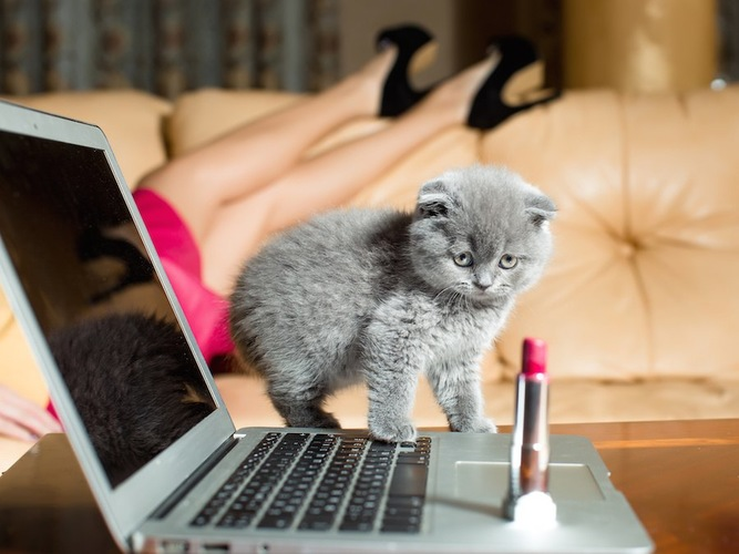 パソコンの上に置かれたPAUL & JOEのリップを見つめる子猫