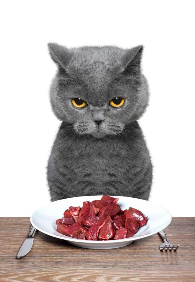 お肉のお皿と猫