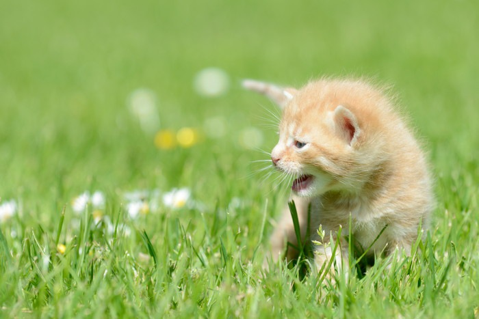 草原の子猫
