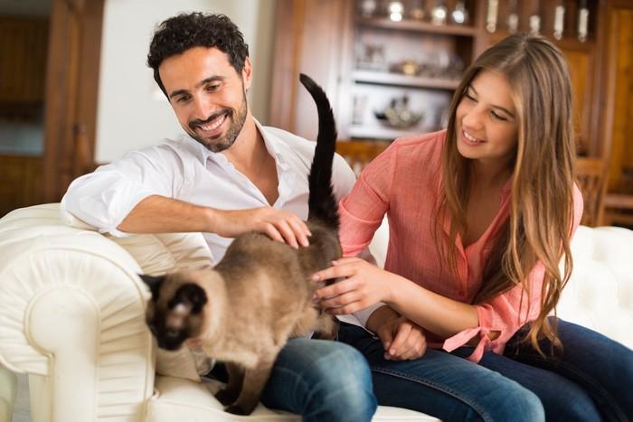 カップルに可愛がられているシャム猫