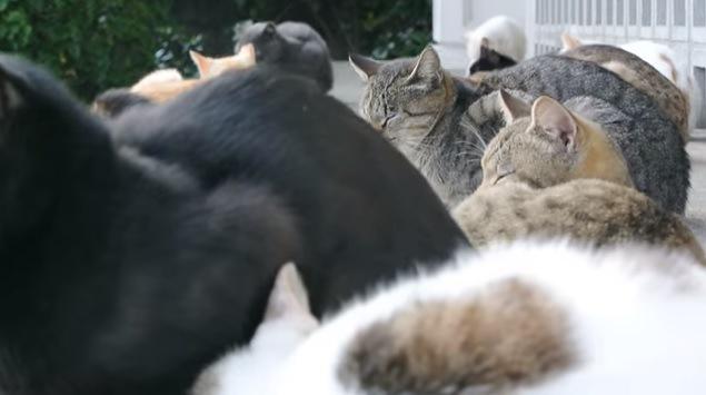 猫達を真横から撮影
