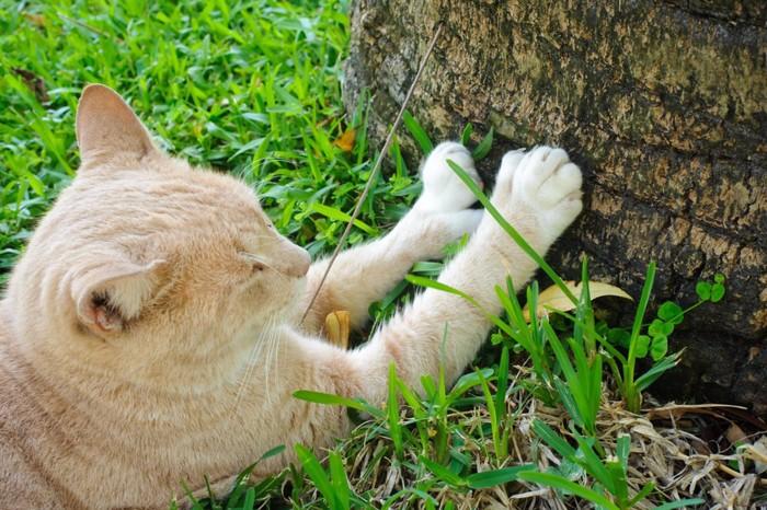くつろぐ野良猫