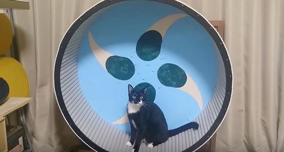 ちょっと回して休憩する黒猫