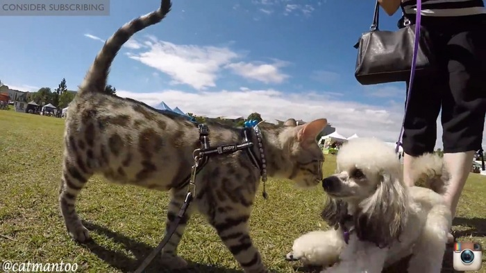 犬に近づく猫
