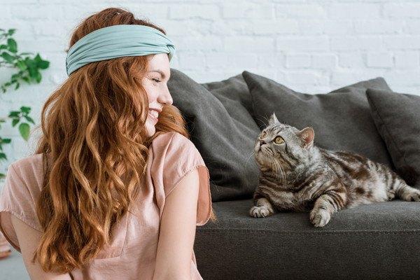 鉢巻をしている女性を見る猫