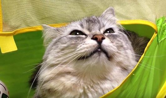 満足そうな顔の猫