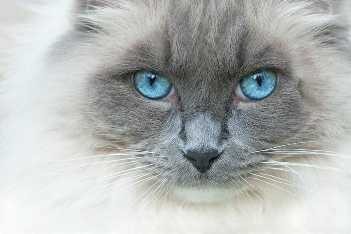 白目が見える猫