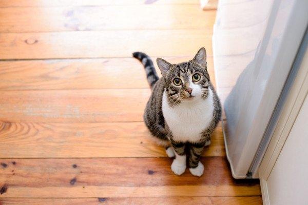 冷蔵庫前で開けるのを待つ猫