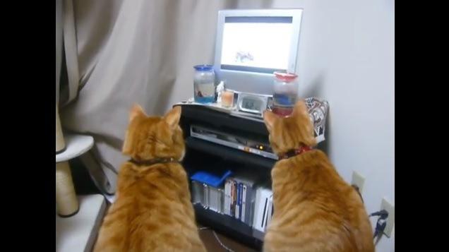 2匹の猫(後ろ向き)