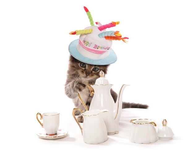 ティーパーティーをしている猫