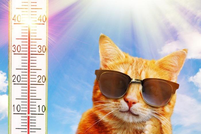 暑い日の猫