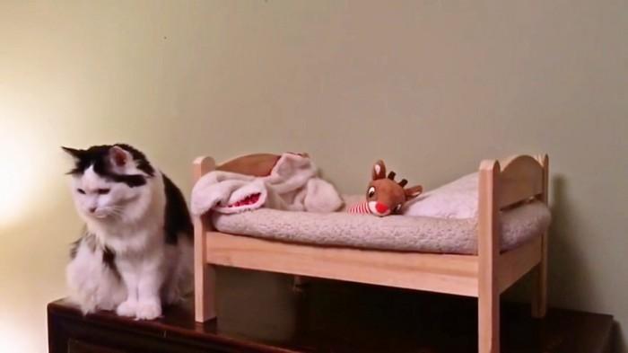 猫とベッド