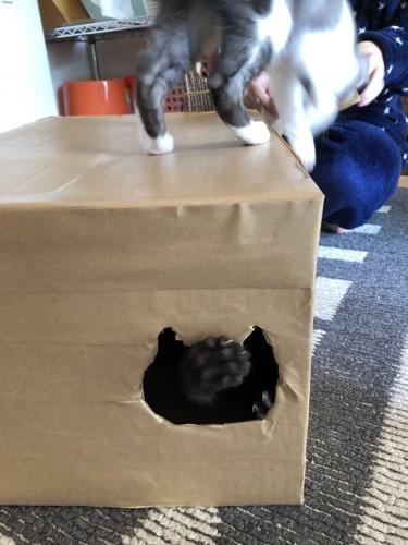ダンボールハウスの上に乗る猫