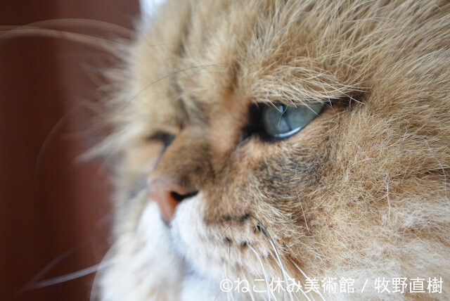 牧野直樹作 しょんぼり猫