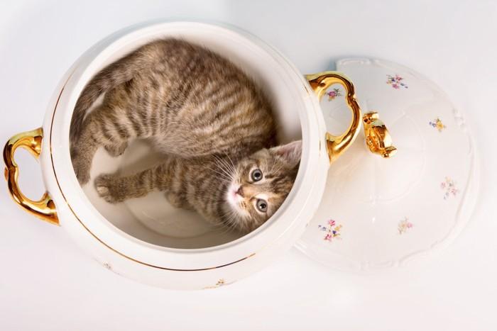 花柄の鍋に入る猫