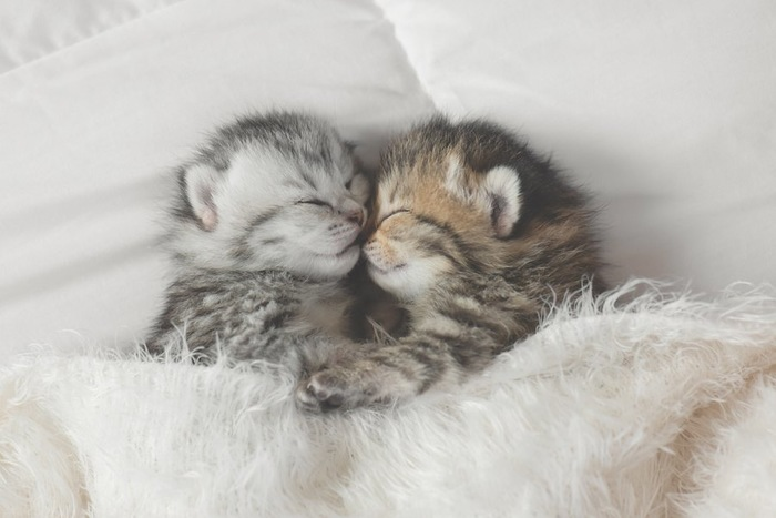 くっついて眠る二匹の子猫