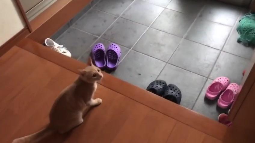 カメラを見上げる猫