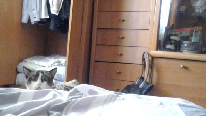 表情が笑える猫