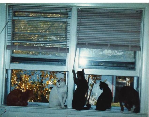 5匹の猫たち