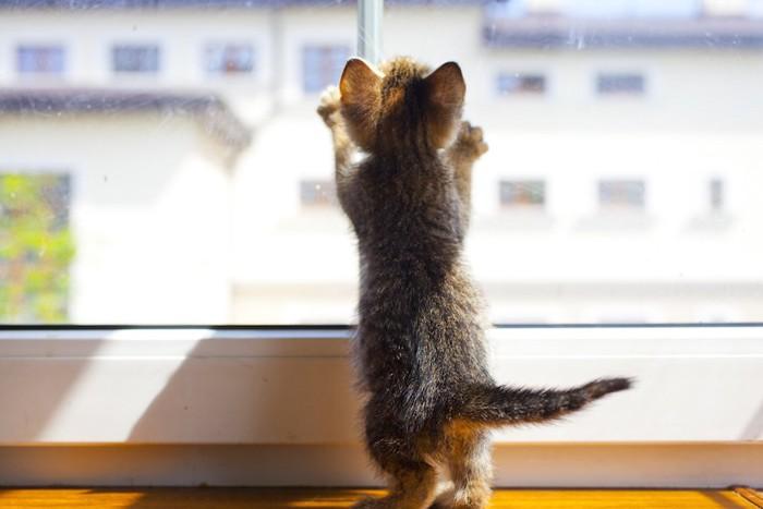 立ち上がって窓の外を見る子猫