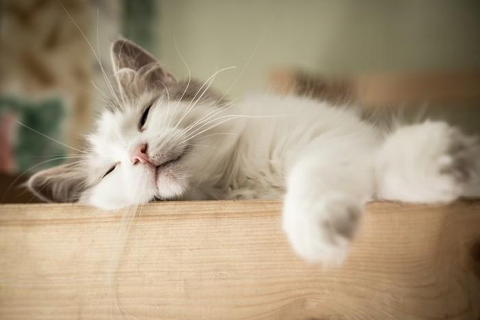 手を伸ばして寝ている子猫