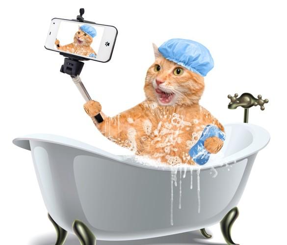 91729451お風呂で自撮りしている猫