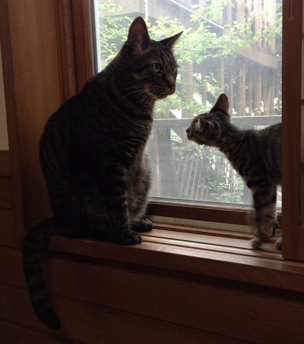 日向ぼっこを楽しむ猫たち