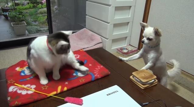 顔を見合わせる猫と犬