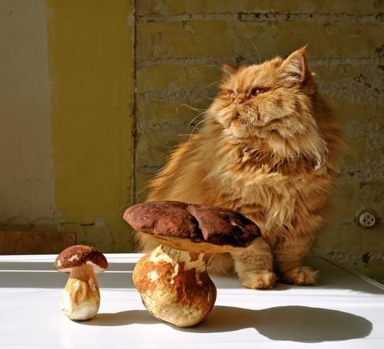大きなきのこと猫