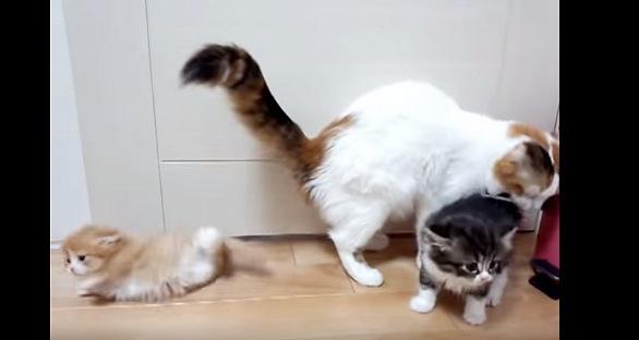 後ろに転がる茶色い子猫