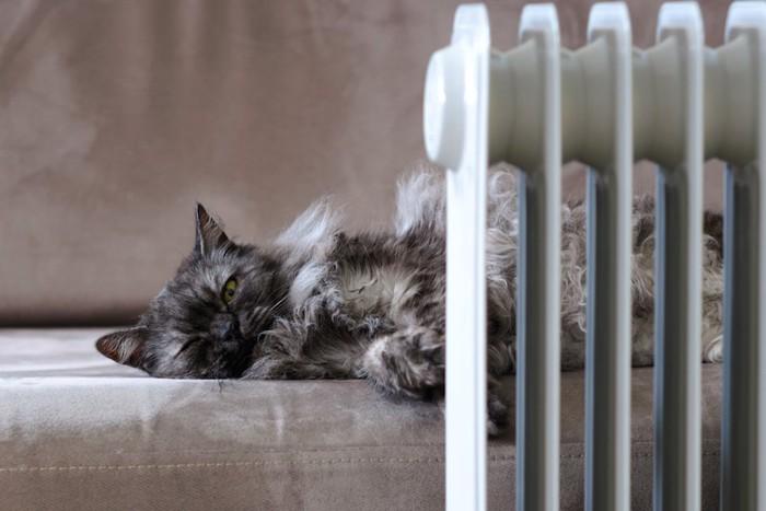 暖房の前でソファーで眠る猫