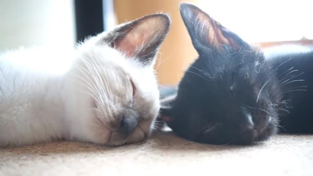 2匹の猫のアップ