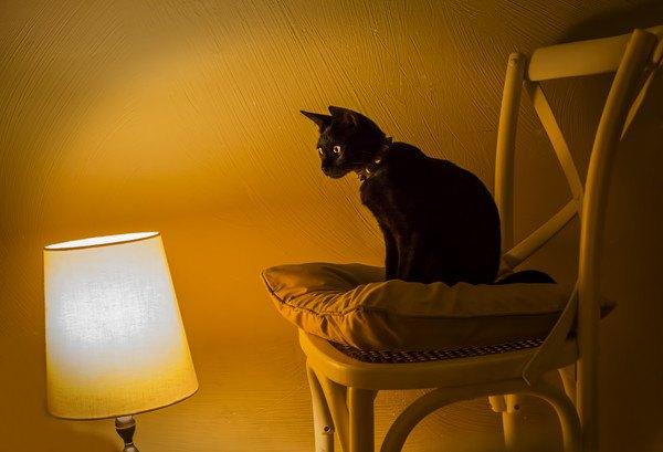 電気スタンドと椅子に座る猫