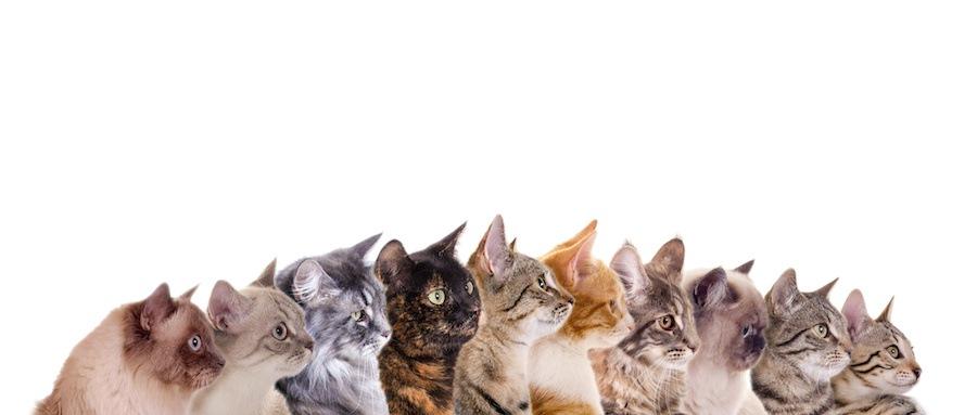 右向きに並ぶさまざまな種類の猫