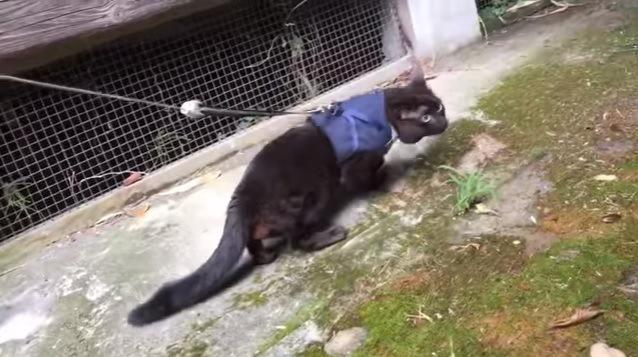 外でしゃがむ猫