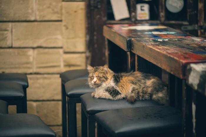 カウンターにいる猫