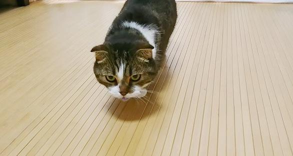 なにかを咥えて戻ってきた猫