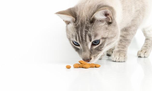 下痢の時のフードを見ている猫