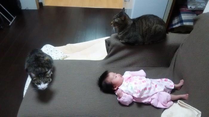 赤ちゃんと寝てる猫